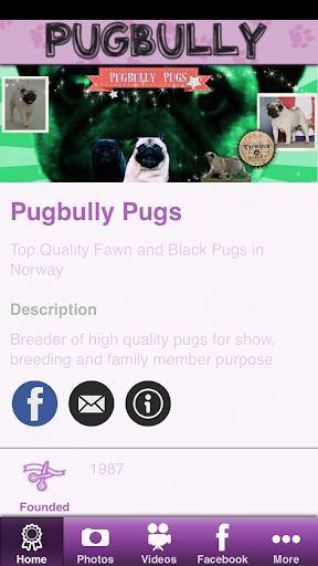 Pugbully Pugs