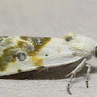 Olive-shaded Bird-dropping Moth
