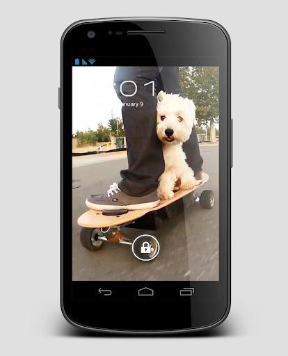 Skate Dog Terrier Live Wallpap