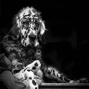 by Andrew Lawlor - Black & White Animals ( black and white, animal )