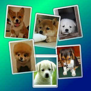 Puppy Widget Free for PC and MAC