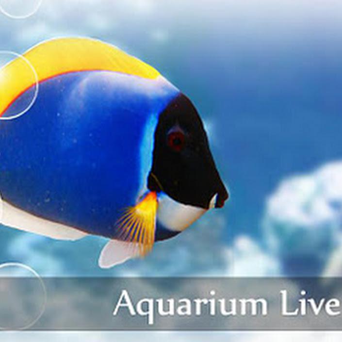 aquarium live wallpaper v3 1 apk download apk full free download