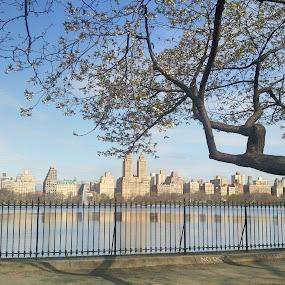 Central Park  by Lejla Hadziabdic - City,  Street & Park  City Parks ( #newyork #centralpark #city #citylife #buildings #lake #park #reflection )