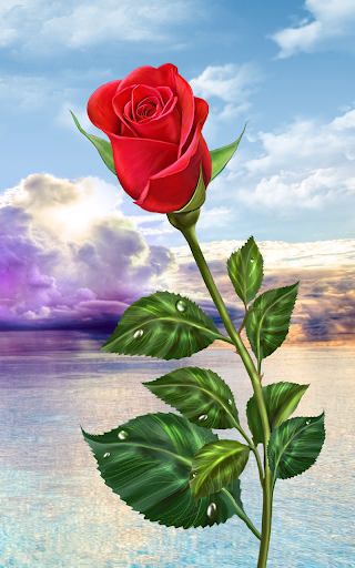 Download rose magic touch flowers google play softwares - Rose flowers wallpaper for mobile ...