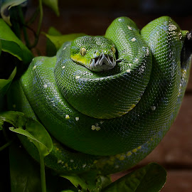 by Wendy Faber - Novices Only Macro ( snake )