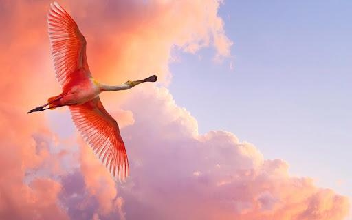 Graceful flamingo Wallpaper