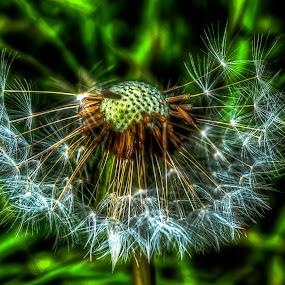 After The Rain by Steve Evans - Flowers Single Flower