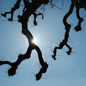 by Agni Kowal - Nature Up Close Trees & Bushes