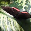 Crimson banded black/red rim