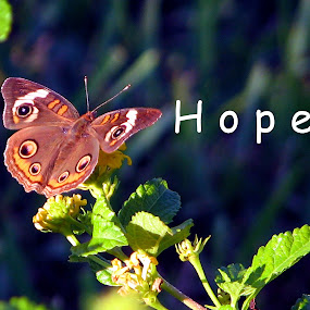Hope Butterfly by Judy Dean - Typography Captioned Photos ( orange, butterfly, brown, hope,  )