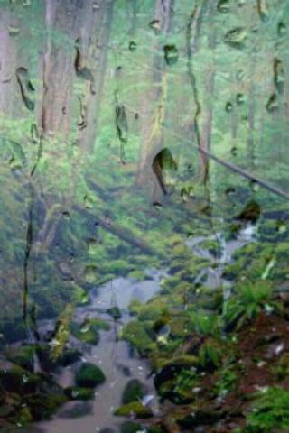 Rain Forest Sounds- screenshot