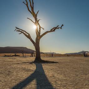 Lone Tree by Nancy Arehart - Nature Up Close Trees & Bushes ( sunburst, shadow, sunset, namibia,  )