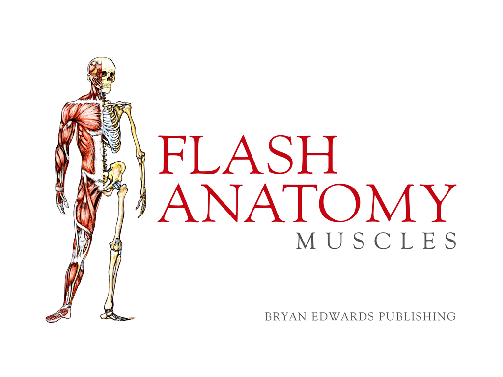 Flash Anatomy Muscles - Free APK 1.2 Download - Free Education APK ...