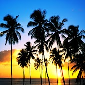 3D Coconut tree 2