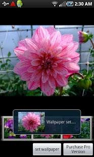 Mothers Flowers screenshot