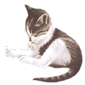Pet Me Cat logo