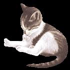 Pet Me Cat icon