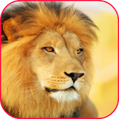 King Lion LiveWallpapers Games