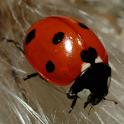 Ladybug – Live Wallpaper logo