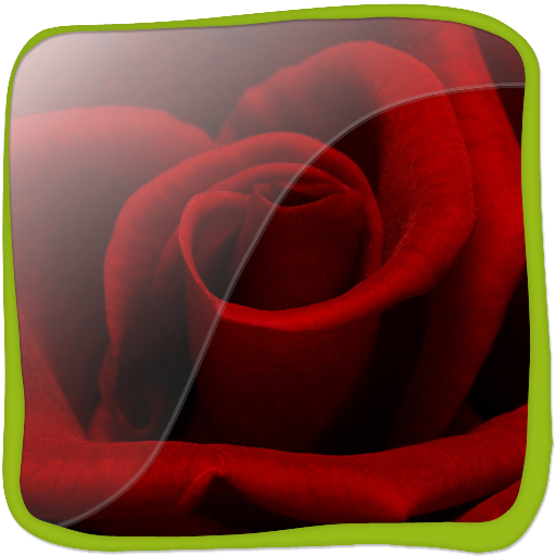 Lovely Rose in 3D