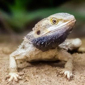 by Rui Quinta - Animals Reptiles