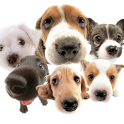 Dogs Live Wallpaper icon