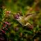 Hbird-10-30-14_TB5A2540.jpg