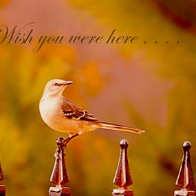 Wish you were here.. by Angelika Sauer - Typography Captioned Photos ( animals, dream, wish, wildlife, sentences, valentine, birds, emotion, love, season, february, quotes, nature, color, feeling, greetings, mockingbirds, compose, celebration, design )