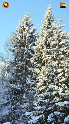 Snowy Winter Wallpaper Dozen