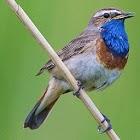 UK Birds Sounds icon