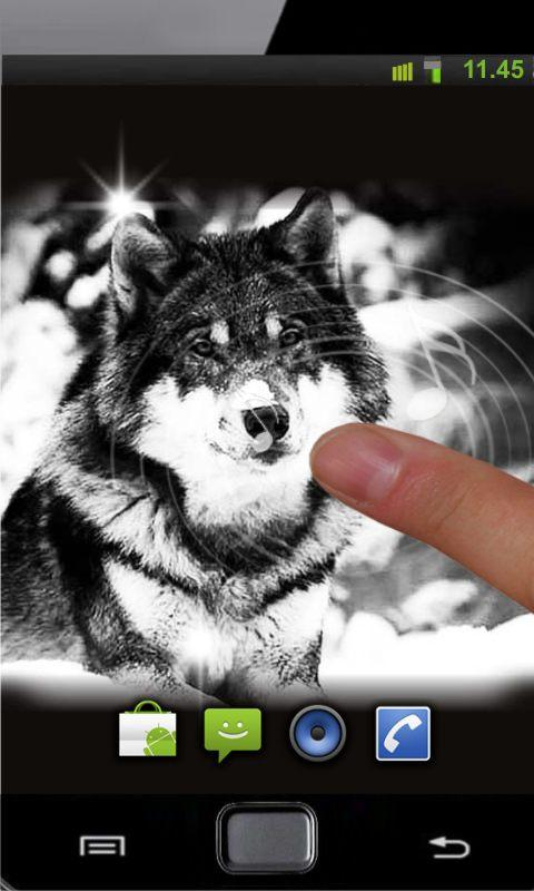 Wolf Free HD live wallpaper - screenshot