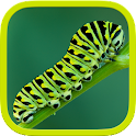 Insects Puzzle icon