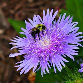 Flower by Toni Haas - Flowers Single Flower ( bee, flower )