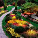 Garden Live Wallpaper