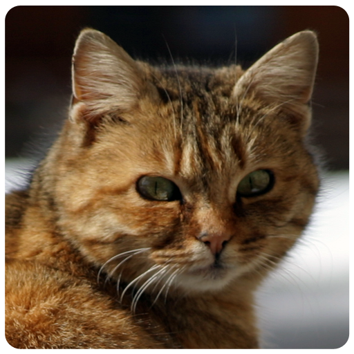 My Cat Secrets