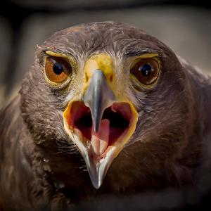lexie bird (1 of 1).jpg