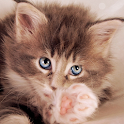 Lovely Cats Cute Wallpaper icon