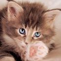 Bella gatti carino Wallpaper icon