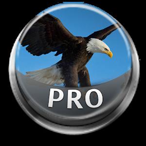 鳥的聲音和鈴聲專業版 音樂 App LOGO-APP試玩