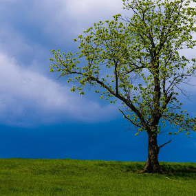 Lone Tree by Reshmid Ramesh - Nature Up Close Trees & Bushes