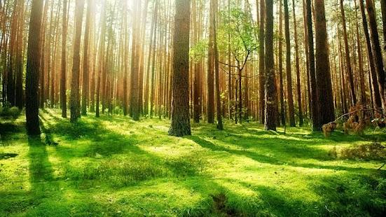 林動態壁紙