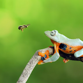 believe you can fly by Andri Priyadi - Animals Amphibians ( nikkor, nikon, macro, bee, frog, insect, animal, insects, indonesia )