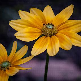 Flowers by Nancy Senchak - Flowers Flower Arangements