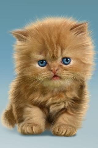 嬰兒貓,可愛的動態壁紙