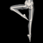 Anatomy for Artists: Ballet