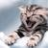 Cats Wallpapers HD logo