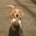 Bruno- 4 luni '