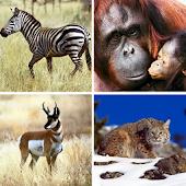 Animals puzzle – Kids game