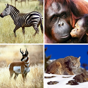 Animals puzzle – Kids game for PC and MAC