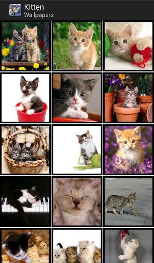 Kittens - HD Wallpapers